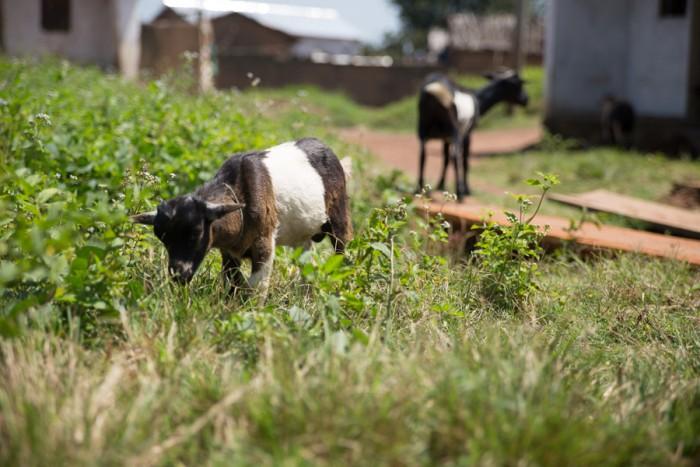 20151112_Peace Corps_Cameroon_Mbakaou_7598