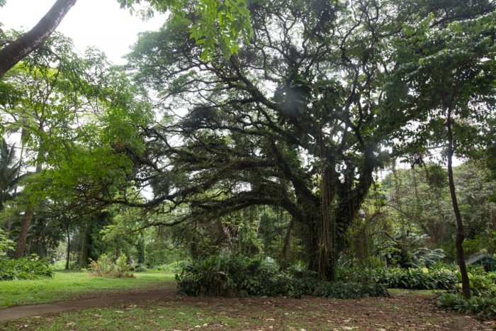 Botanical Garden at Limbe